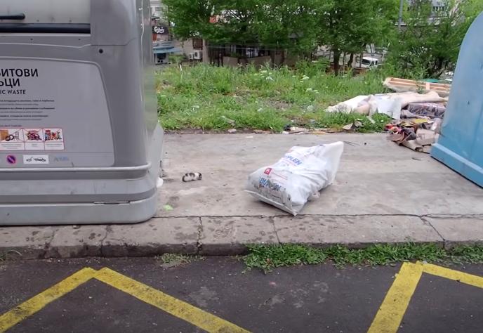 ゴミ捨て場にいる子猫