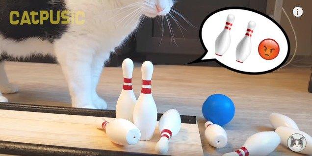 残ったピンを見て悩む猫