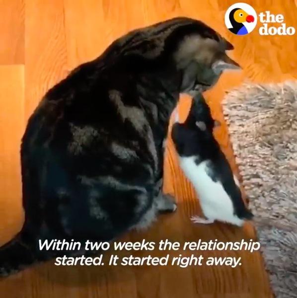 猫にキスするねずみ