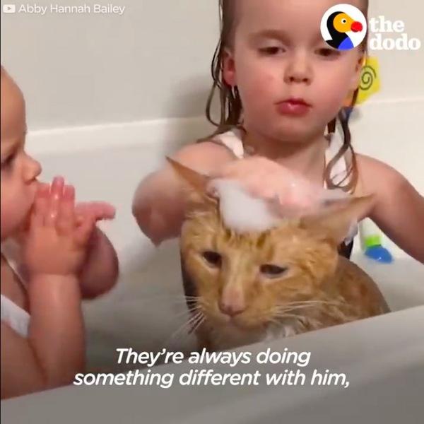お風呂に入れられるベイリー