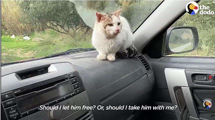 車のフロントに座る猫