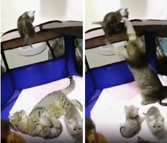 子猫を連れ戻す母猫