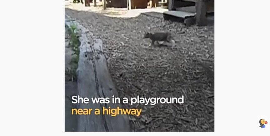 危険エリアにいる子猫