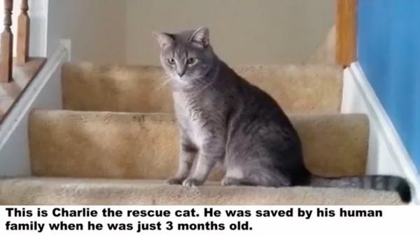 猫のチャーリー