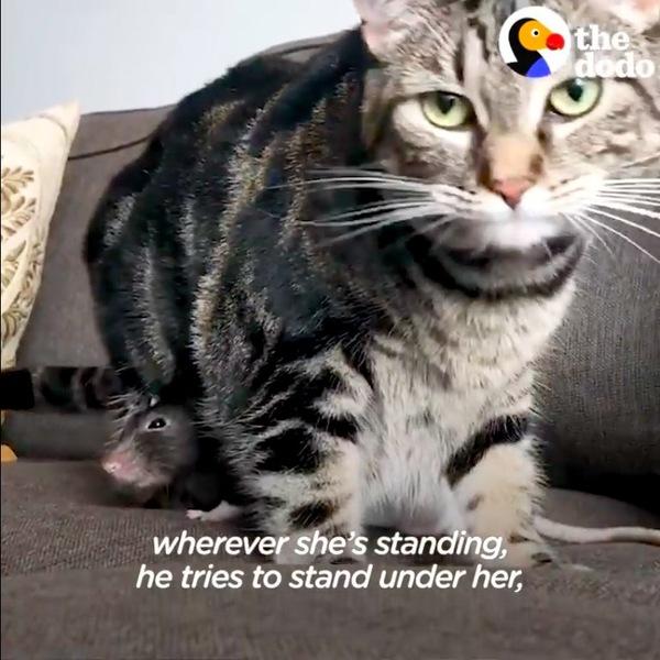 猫の足元に入ったねずみ
