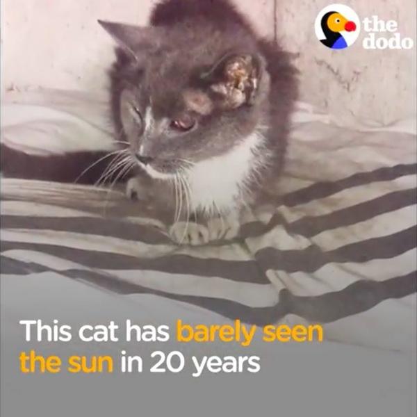 地下室で発見された猫