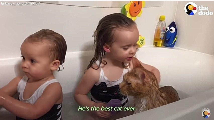 子供と一緒にお風呂に入る猫