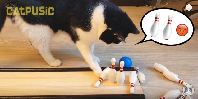 ピンを押す猫