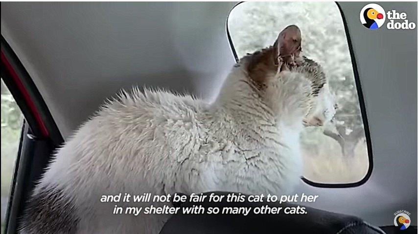 車の外を見る猫