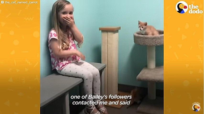 子猫と対面する女の子