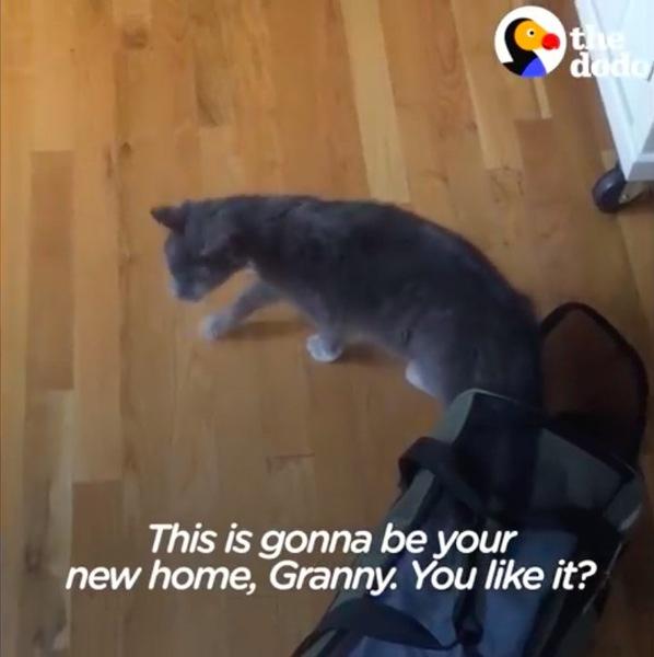 新しいお家での猫