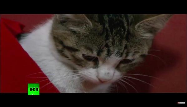 毛布にくるまれる子猫