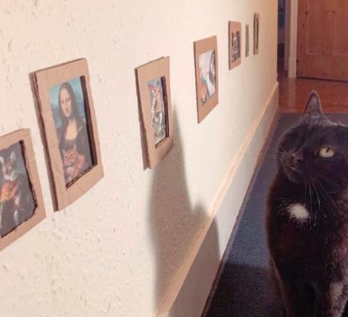 美術館ごっこをする猫