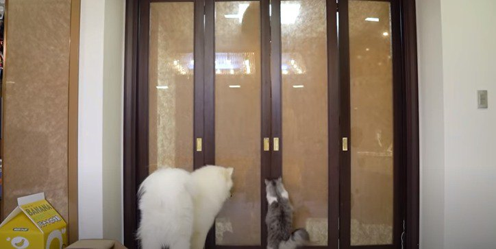 ドアの前で待つ猫と犬