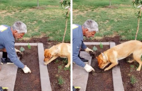穴掘りする犬