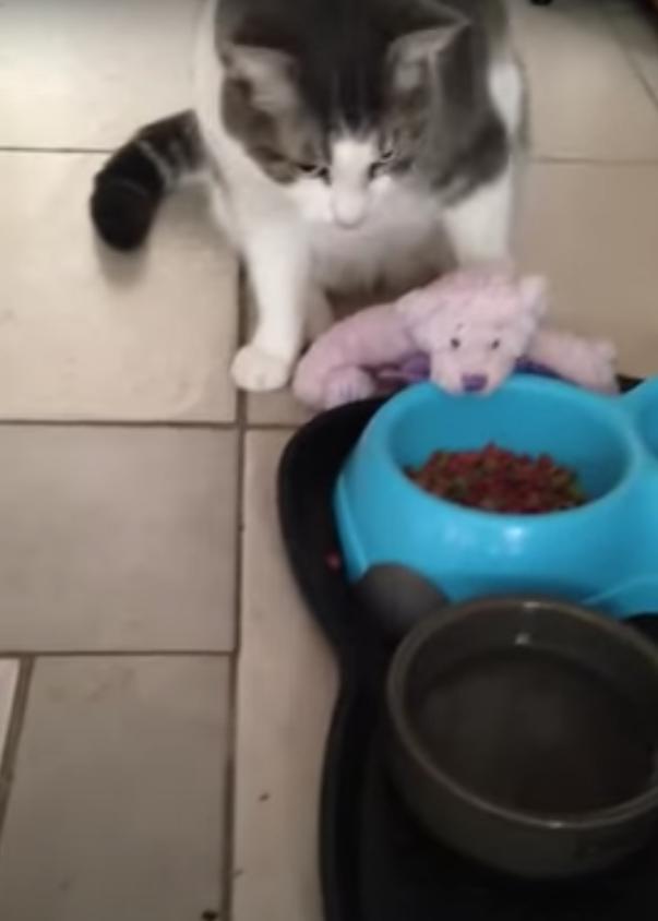 クマのぬいぐるみと猫