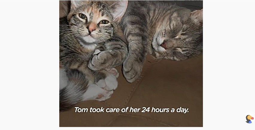 先住猫のトム