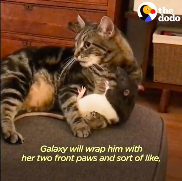 ねずみをハグする猫
