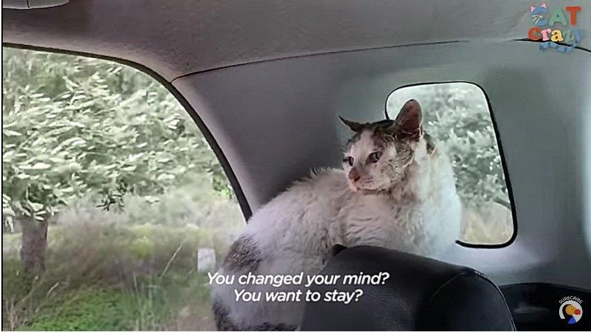 ドアの開いた車の中にいる猫