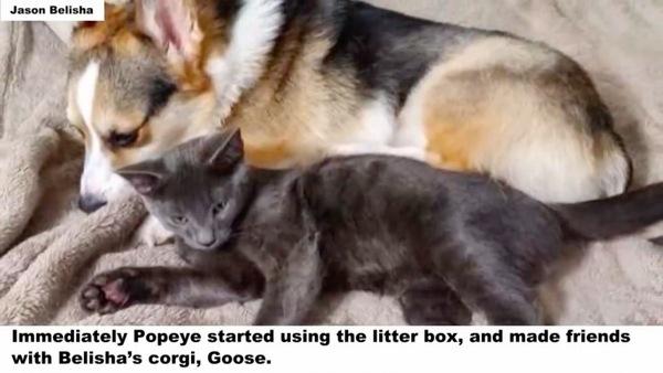 ポパイとコーギーのグース