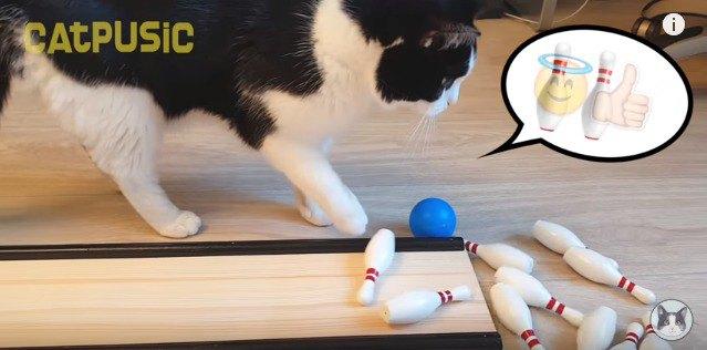 ピンを倒す猫