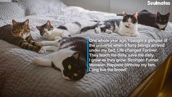 ベッドの上に集合した猫一家