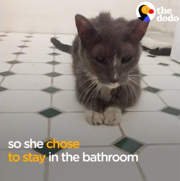 お風呂に立てこもる猫