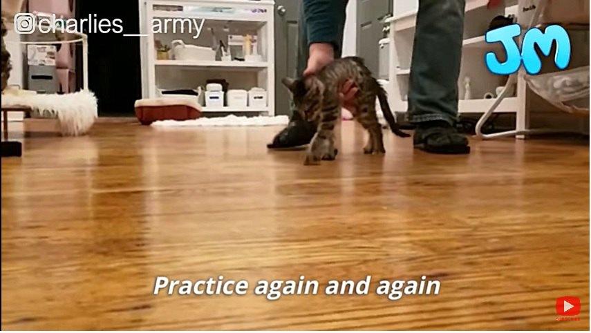 歩く練習をする子猫