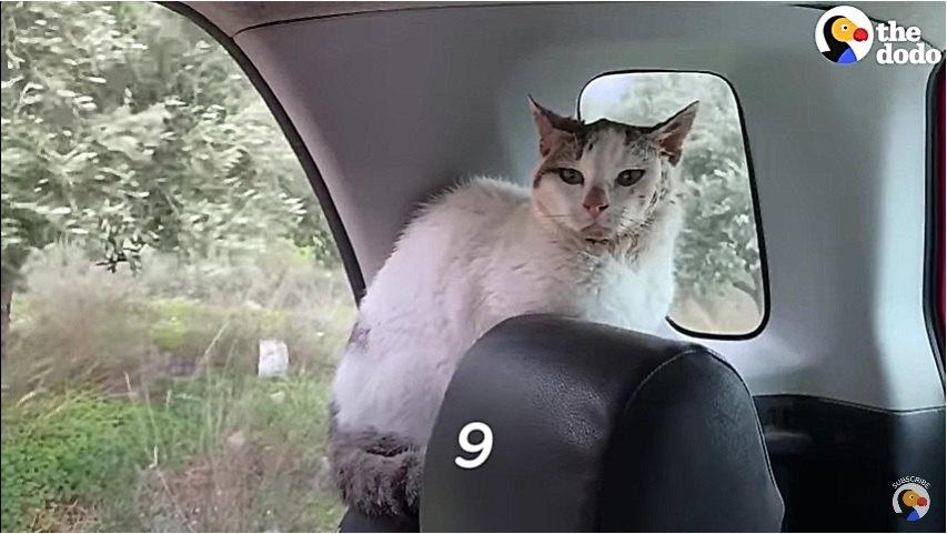 車の中にいる猫