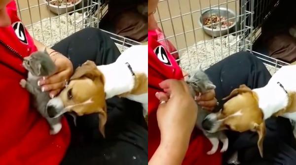 子猫を咥える母犬