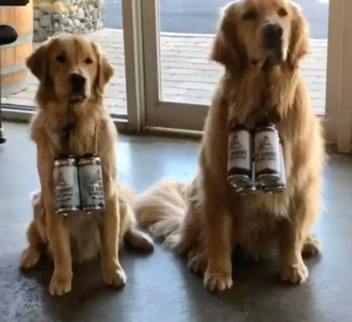 ビールを運ぶ犬
