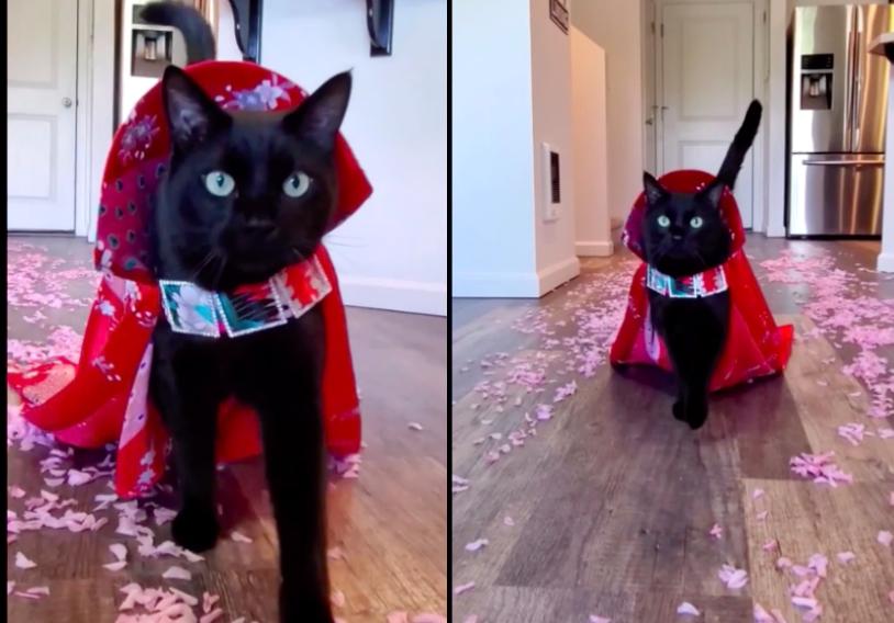 花びらのランウェイを歩く黒猫