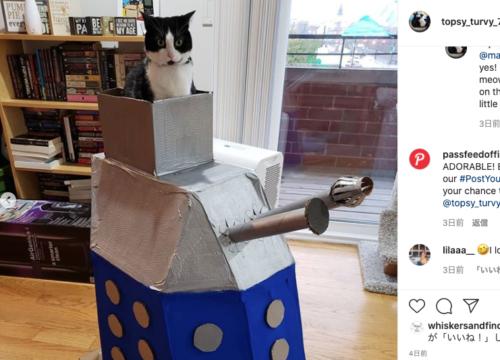 ダーレクに乗った猫