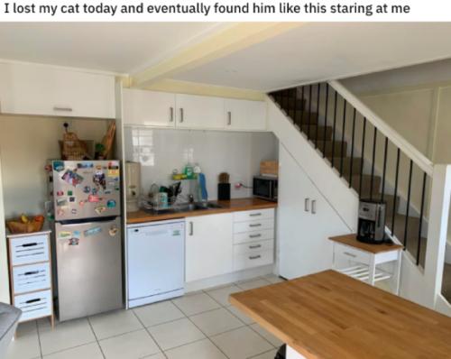 猫が隠れている