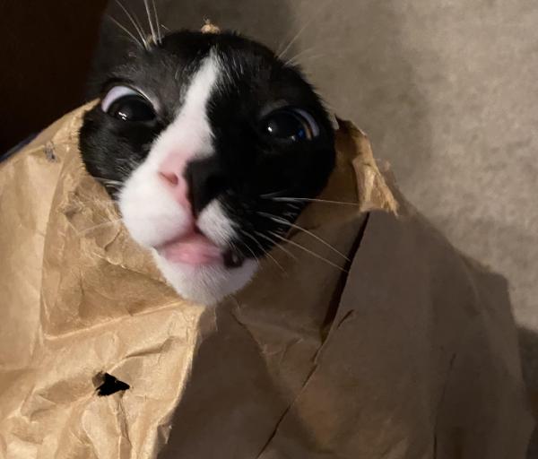 紙袋から生まれた猫