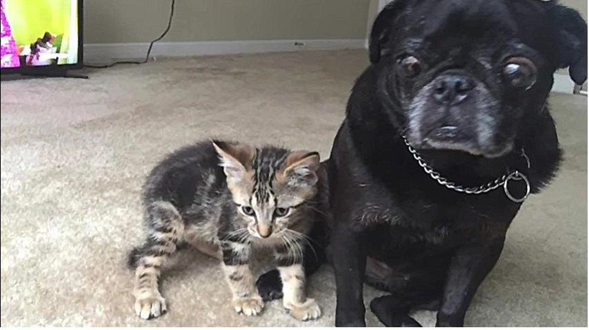 仲良くなった犬と猫