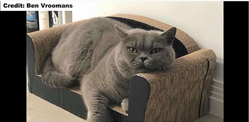 猫のお気に入りのソファー