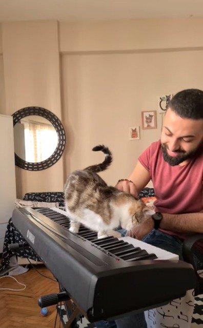 ピアノを弾く飼い主にすりすりする猫