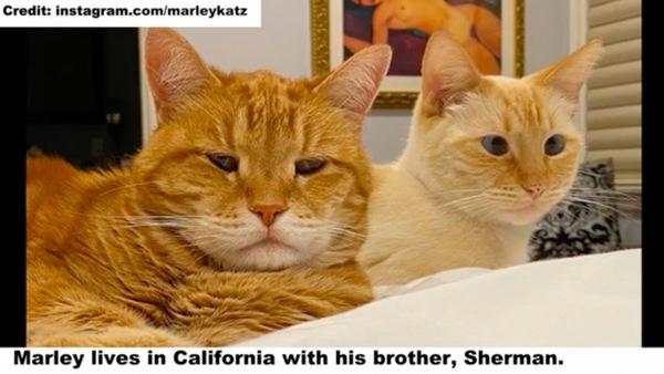 兄弟猫のシャーマンと