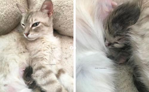 子猫を亡くした母猫と母猫を亡くした子猫