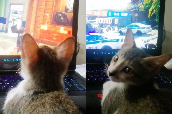ゲーミング猫