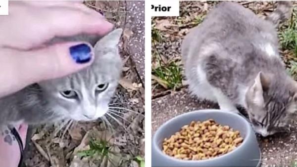 母猫にご飯をあげる女性