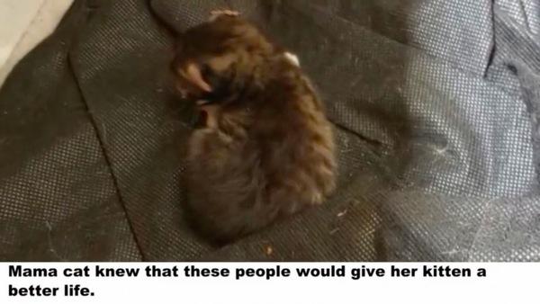 置いて行った子猫