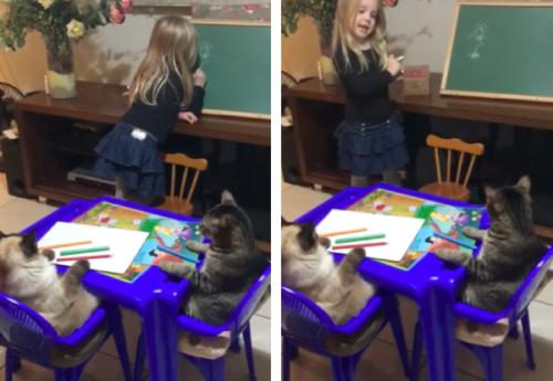 猫にお絵かきを教えている女の子
