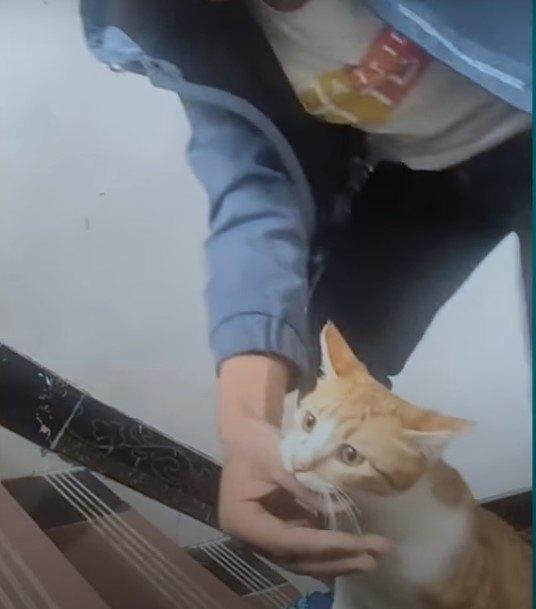 飼い主の腕を引っ張る猫
