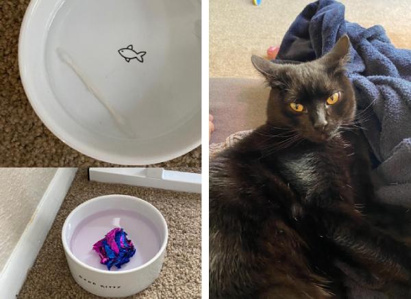 水皿に綿棒を沈める猫