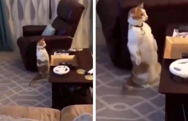 驚いて立ち上がる猫