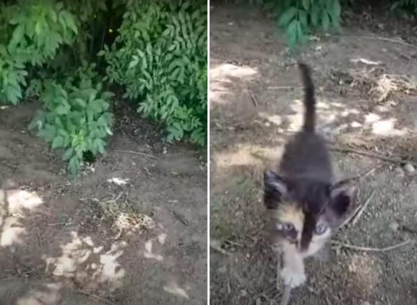 藪から出てきた子猫