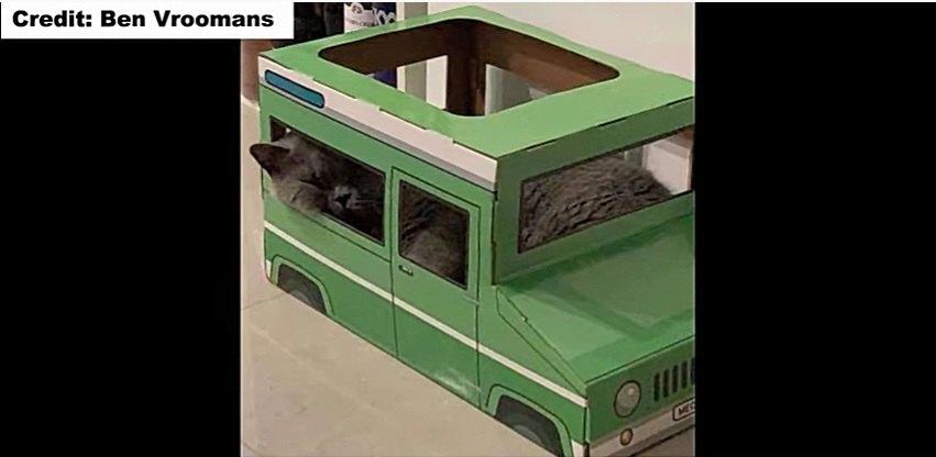 猫用ジープに乗る猫