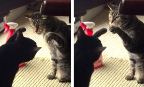 優しい戦い方をする猫たち